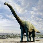 Eljött a dinoszauruszfosszília-Kánaán Kínában