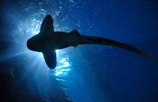 """""""Pörölycápa-óvodát"""" találtak a Galápagos-szigetek közelében"""
