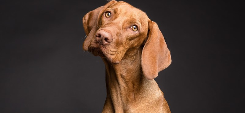 Visszahívnak egy kutyaeledelt, mert túl sok benne a D-vitamin