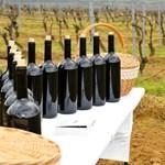 Könnyebb lesz az életük jövőre a bortermelőknek, mint idén