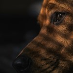 Jogosítványt kért a Facebook egy kutyától