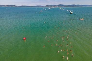 Májustól miniszteri biztos óvja a Balaton élővilágát