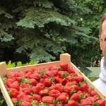 Miniszter így még nem emelt ládányi epret, mint Varga Mihály