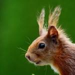 20 kiló tobozt pakolt be egy autóba egy mókus