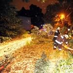 Vihar: fák dőltek a sínekre, késnek a vonatok