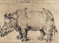 Hatalmas Dürer-kiállítást rendeznek Bécsben