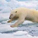 Mackófesztivál: a medvejelmezes gyerekek fillérekért léphetnek be az Állatkertbe