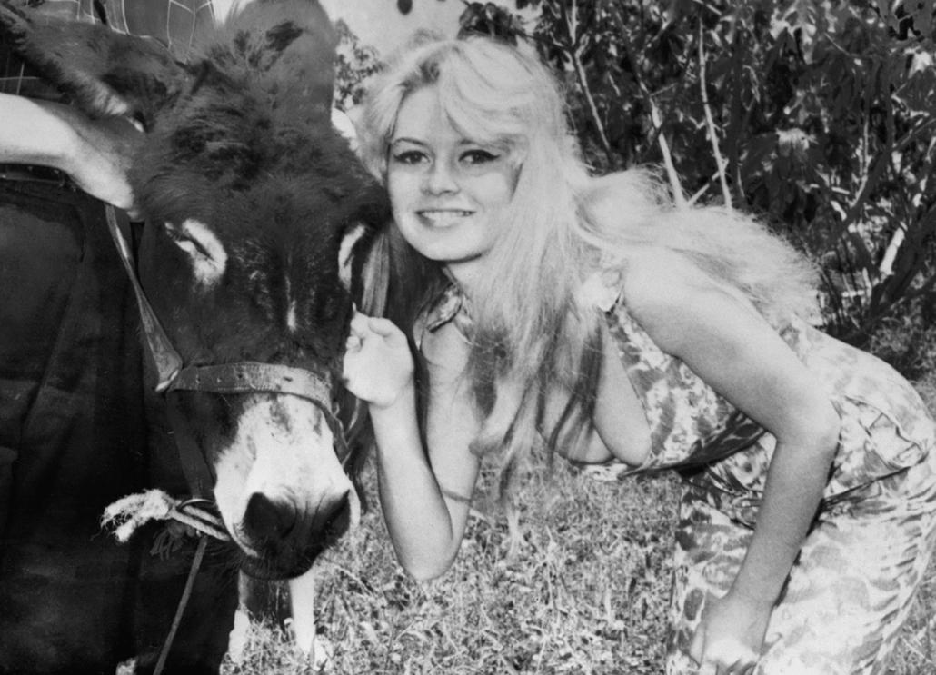 afp.1957.05.17. - Nizza, Franciaország: szamárral a ''La Parisienne / Egy párizsi lány'' című film forgatásán - Brigitte Bardot nagyítás