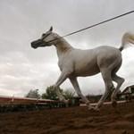 Facebook-poszt mentette meg egy ló életét