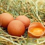 Tyúk vagy a tojás? Újabb érdekes egyetemi kutatás