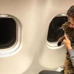 Egy orosz macskatulajdonos túljárt az Aeroflot eszén