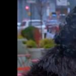 Emilia Clarke Jon Snow-nak öltözve járta New York utcáit - videó