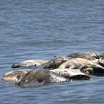 Több száz elpusztult teknőst találtak Mexikó déli partjainál