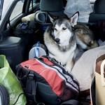 Hová mehetünk üdülni kutyával? - Magyar adatbázis született