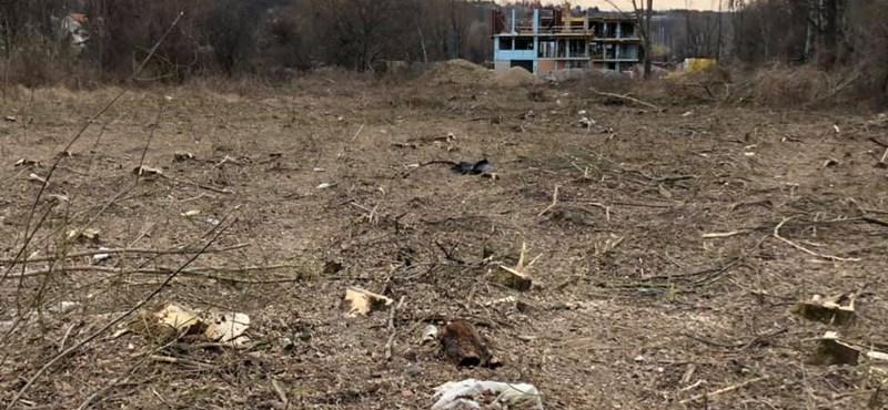 Ősfás erdőt irtottak ki Balatonfűzfőn