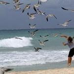 Napi tipp: költözzön tengerpartra!