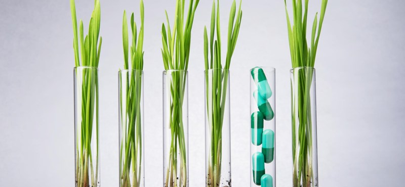 Jobban bízik a gyógynövényekben, mint a szintetikus gyógyszerekben? Akkor ezek érdekelni fogják