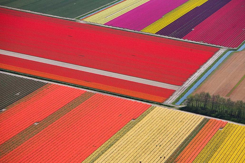 Tulipánföldek Észak-Hollandiában. 2008. május.