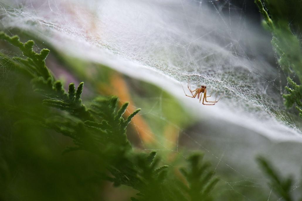 afp. pók, pókháló, nagyítás - Drezda, Németország, 2013.09.05.