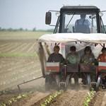 Csapást mért a magyar agráriumra a német bérpolitika