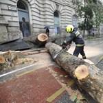 """""""Politikai okból"""" nem lehetett kivágni a viharban kidőlt Alkotmány utcai fát"""