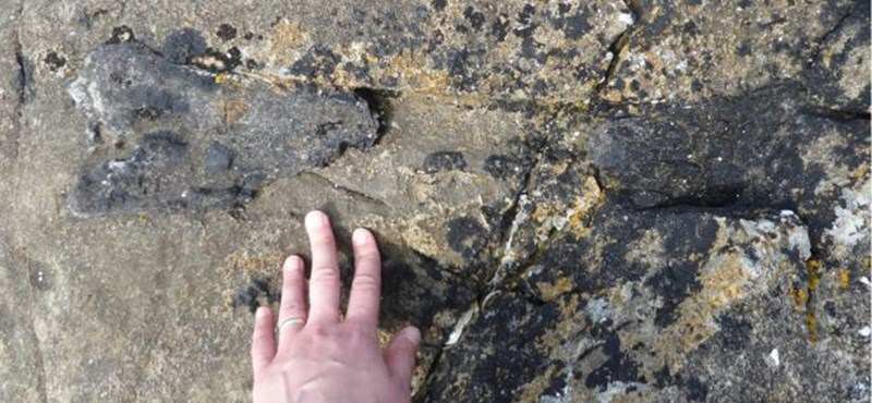 166 millió éves dinócsontban botlott el a mázlis paleontológus