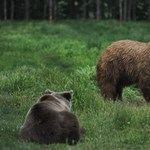 Medvét találtak egy oroszországi általános iskolában