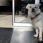 Napokig várta a kórház előtt a gazdáját egy kutya Törökországban
