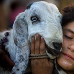 Áldozd fel a bárányod a fiad helyett - Nagyítás-fotógaléria