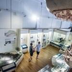 """""""Majd keresünk új muzeológusokat"""" – A Természettudományi Múzeumot is lenyomja a kormányzati arrogancia"""