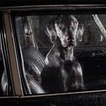 Ilyen bánatosan csak a kocsiban felejtett kutyusok tudnak nézni
