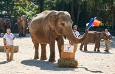Bejött a hamburgi állatkert elefántjának jóslata a labdarúgó-Eb-ről