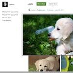 Tegye át Facebook-képeit a Google+-ra is!