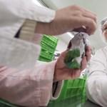 Keserű szájíz – végre magára talált a hazai édesipar, erre elmegy a munkaerő