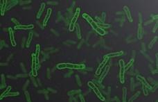 Elkészült a bevonat, amely 15 perc alatt elpusztítja a baktériumokat