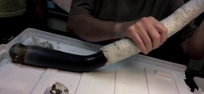 Élő példányt találtak a kutatók a titokzatos óriásféregből - videó