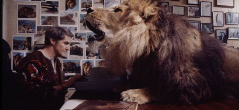 Te együtt élnél egy oroszlánnal?