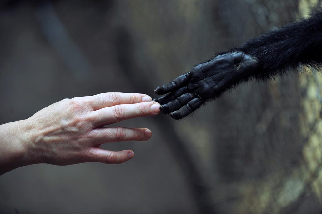 Penaflor, Chile: majom érintése a város rehabilitásciós intézetében - 7képei