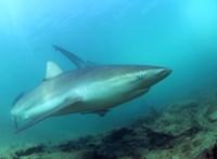 Emberek százmillióit fenyegeti az óceánok oxigénszintjének a csökkenése