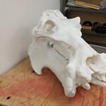 3D-nyomtatott állatcsorda várja a bevetést Pécsett