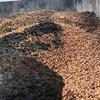 Kiakadt a holland hagymás, mert a magyar hatóságok megsemmisítették egy rakományát