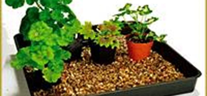 Így teleltesse szobanövényeit, hogy szépek legyenek tavasszal!