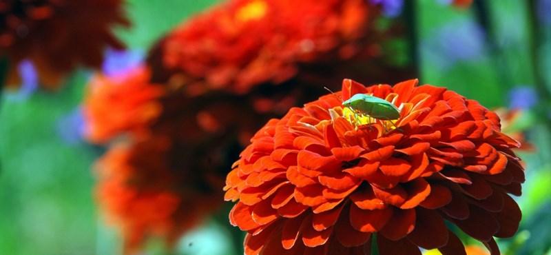 Vasszigorral jön az EU-s növényútlevél a poloskák miatt