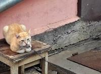 Fotó: Láncra vert macskát mentettek az állatvédők