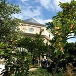 Elege lett a főkertésznek, lezárta a Füvészkert leghíresebb látványosságát