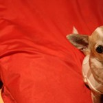 Bebizonyították, hogy a kutyáknak is van igazságérzetük