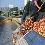 Az Austria Juice-ból is kipréselték a 20 forintos árat a gazdák, de még így is hatalmasat buknak