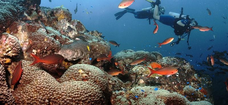 Egy tudós elhatározta, hogy felfedez néhány új tengeri fajt – 7300-at sikerült