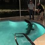 Krokodil úszott be egy floridai család medencéjébe