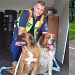Fotó: Police szalaggal mentették az M3-ra tévedt kutyákat a jófej rendőrök